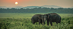 Nationalparks in Sri Lanka