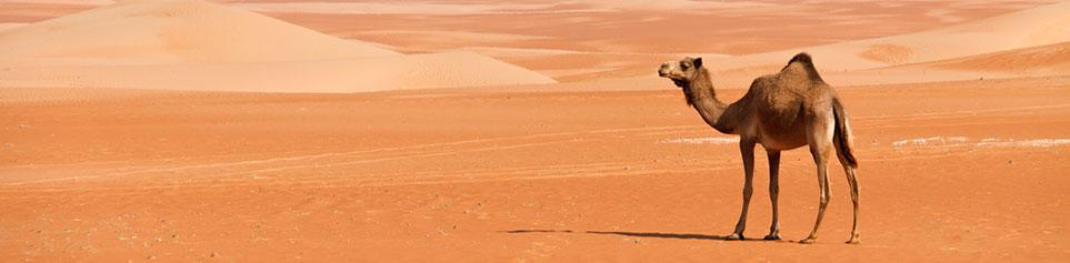 Arabien Reisen travel worldwide Empfehlung