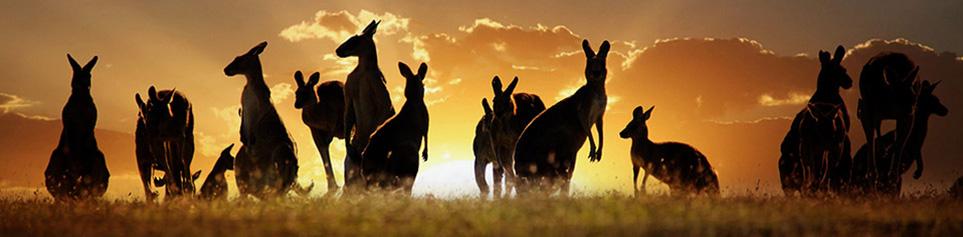 Austalien Reisen und Rundreisen