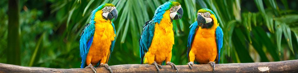 Südamerika Reise günstig buchen inkl. Flug
